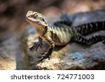lizard sitting on brown stone... | Shutterstock . vector #724771003