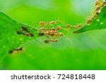 Ant action standing.ant bridge...