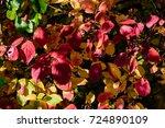autumn color outdoor foliage... | Shutterstock . vector #724890109