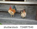 Two Colorful Cocks On The...