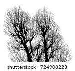 black pine tree dry on white... | Shutterstock . vector #724908223