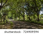 the tree tunnel is a resting... | Shutterstock . vector #724909594
