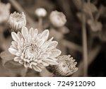 orange yellow chrysanthemum mum ... | Shutterstock . vector #724912090