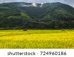 Golden Rice Field  A Beautiful...