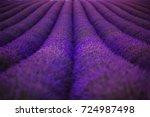 The Spherical Rows Of Flowerin...