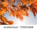 golden maple leaves on a tree... | Shutterstock . vector #725031868
