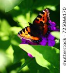 Small photo of butterfly Admiral
