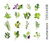 clip art illustrations of herbs ... | Shutterstock .eps vector #725114338