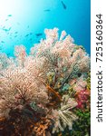tree coral | Shutterstock . vector #725160364
