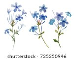 watercolor set illustration. ... | Shutterstock . vector #725250946