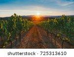 vineyard at sunset. | Shutterstock . vector #725313610