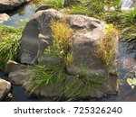 a stone overgrown with grass... | Shutterstock . vector #725326240