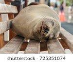 Galapagos Sea Lion Asleep On...
