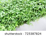 Small photo of Green plant, leaf, to beautify the space