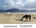horses on the beach isle of... | Shutterstock . vector #725389999