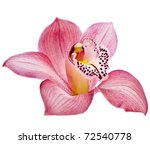 Pink Orchid Flower Head Close...