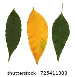 leafs on white background | Shutterstock . vector #725411383