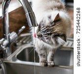 close up of a rag doll cat... | Shutterstock . vector #725442268