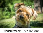 dog curiosity expression... | Shutterstock . vector #725464900