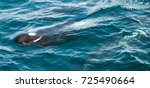 encounter with long finned... | Shutterstock . vector #725490664