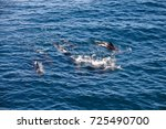 encounter with long finned... | Shutterstock . vector #725490700