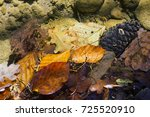 fallen leaves in transparent... | Shutterstock . vector #725520910