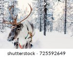 reindeer in a winter forest in... | Shutterstock . vector #725592649