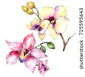 wildflower orchid flower in a...   Shutterstock . vector #725595643