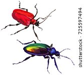 exotic beetle wild insect in a... | Shutterstock . vector #725597494