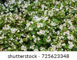 Floral Background  White...
