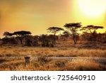 serengeti national park sunset | Shutterstock . vector #725640910