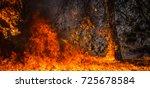 fire. wildfire  burning pine... | Shutterstock . vector #725678584