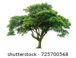 Samanea Saman Tree Isolated White - Fine Art prints