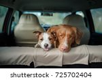 Two Happy Dogs In The Car Peep...