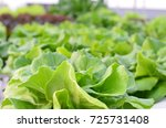 close up of organic hydroponic... | Shutterstock . vector #725731408