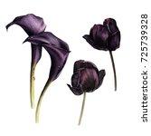 Callas And Tulips  Watercolor ...