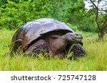 galapagos giant tortoise ... | Shutterstock . vector #725747128