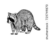 hand drawn raccoon. retro... | Shutterstock .eps vector #725749870