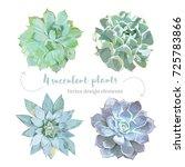 rosette shaped succulents... | Shutterstock .eps vector #725783866