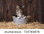 Adorable Kitten With Straw In ...