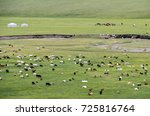 Mixed Herd Of Sheep And Kashmi...