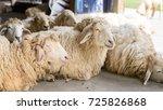 cheep on farmers market   Shutterstock . vector #725826868