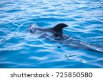 beautiful dolphin in the water. ... | Shutterstock . vector #725850580