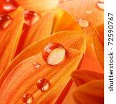 orange flower petals with water ...