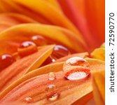 Orange Flower Petals With Wate...