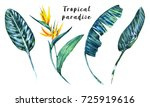 tropical leaves  flowers ... | Shutterstock . vector #725919616