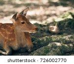 japan's famous nara deer. sika... | Shutterstock . vector #726002770