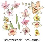 different orchids isolated on... | Shutterstock .eps vector #726050860