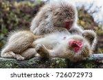 snow monkeys in a natural onsen ... | Shutterstock . vector #726072973
