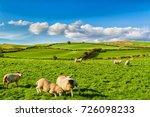 Rolling Green Farm Fields With...